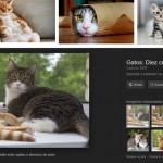 Image google-images_5dc2fe01_960x486.png